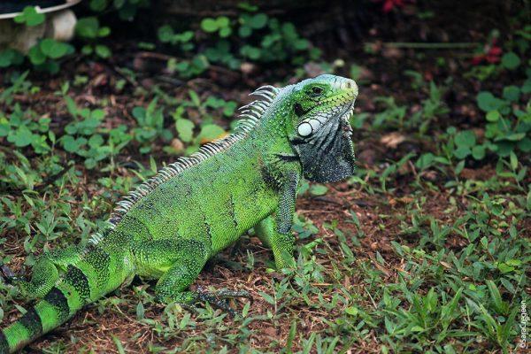 Kourou, French Guiana