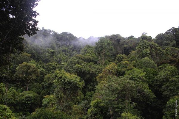 Overlooking the jungle canopy