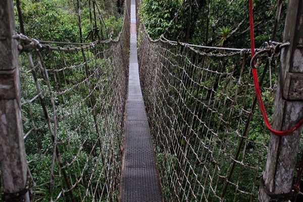 Rope bridge connecting viewing platforms.